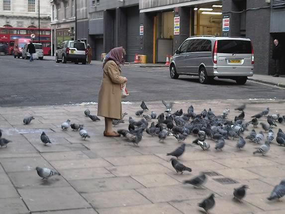 How many times have we seen this? Members of the public feeding feral pigeons can now be slapped with an anti-social behaviour order (ASBO). If only they knew the misery and harm this pastime is causing others?. .  Not to mention the huge cost of cleaning walkways, gutters, building structures and constant redecoration of buildings!